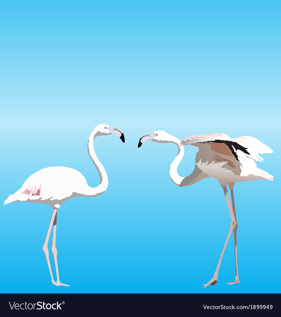 With two flamingo vector | Price: 1 Credit (USD $1)