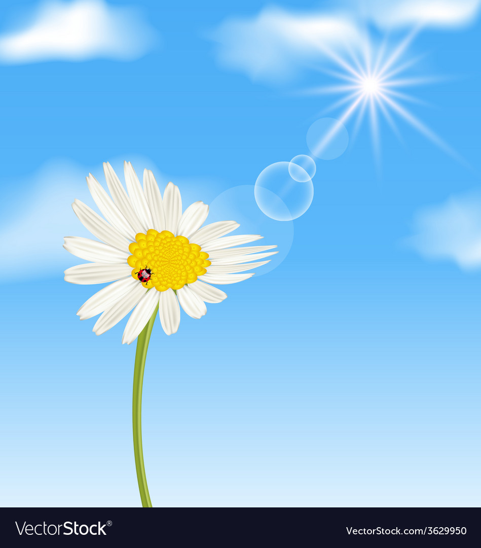 Chamomile flower and blue sky with clouds vector | Price: 1 Credit (USD $1)