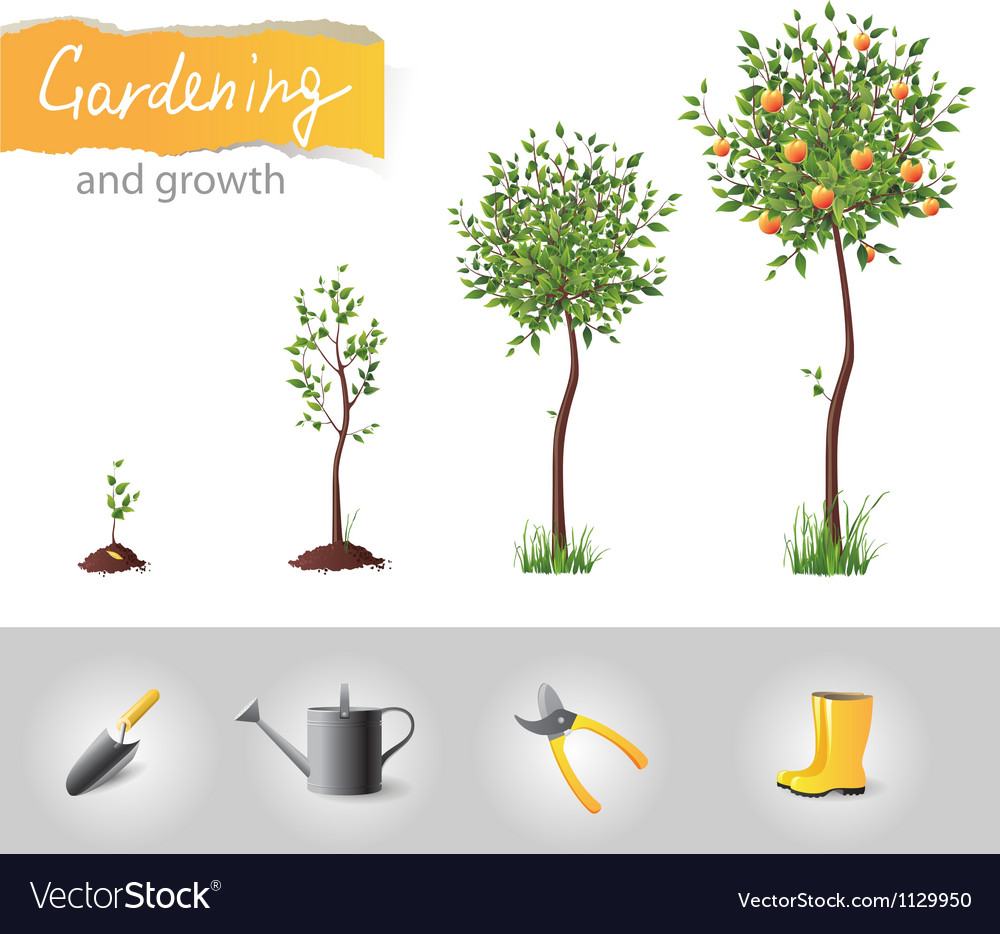 Gardening and growth vector | Price: 1 Credit (USD $1)