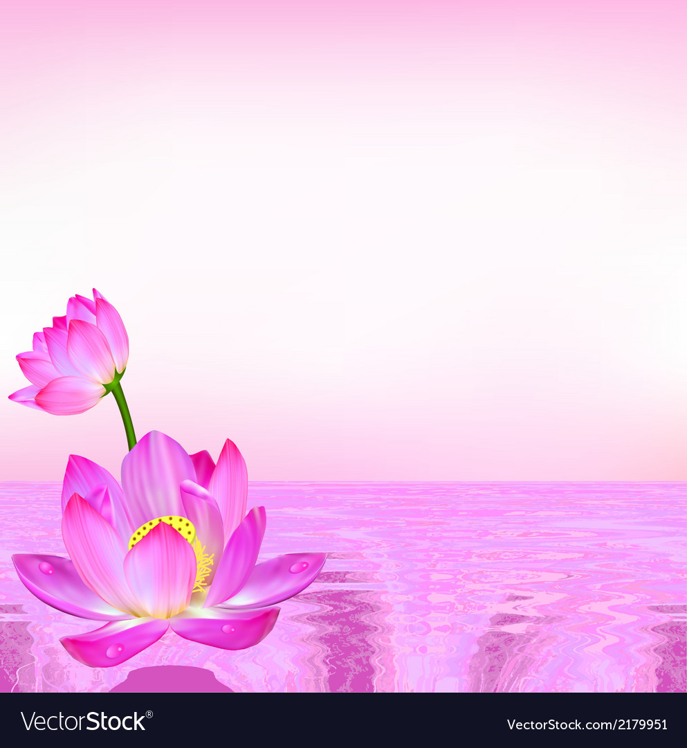 Pink background flower lily vector | Price: 1 Credit (USD $1)