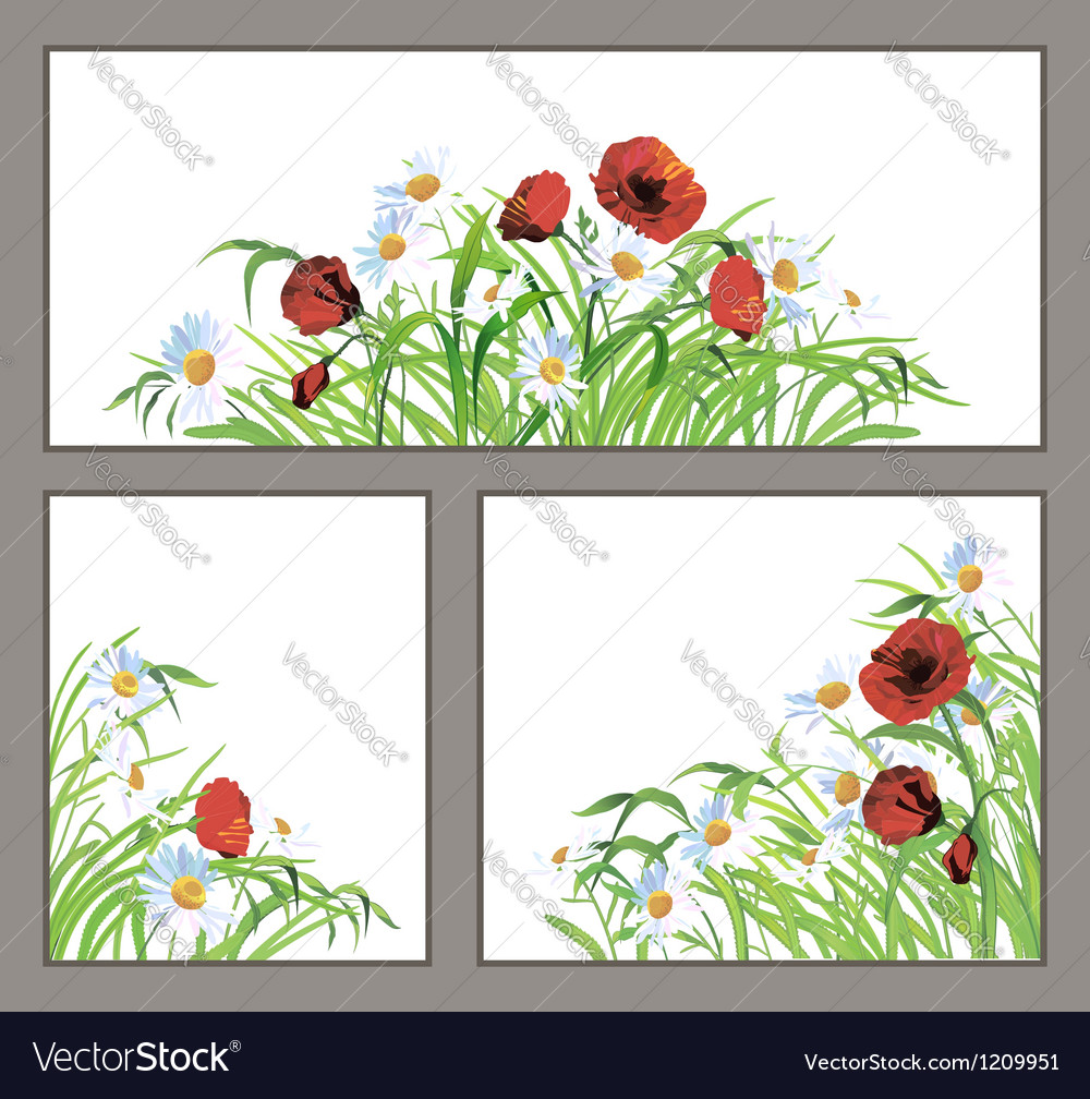 Set summer flower poppy daisy isolated on white vector | Price: 1 Credit (USD $1)