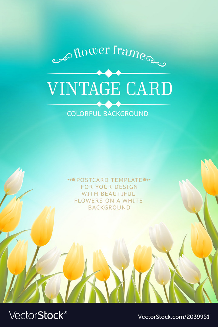 Summer card with white tulips vector | Price: 1 Credit (USD $1)