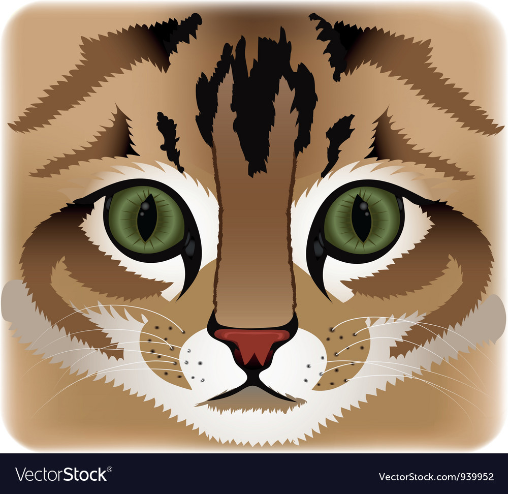 Cat face vector | Price: 1 Credit (USD $1)