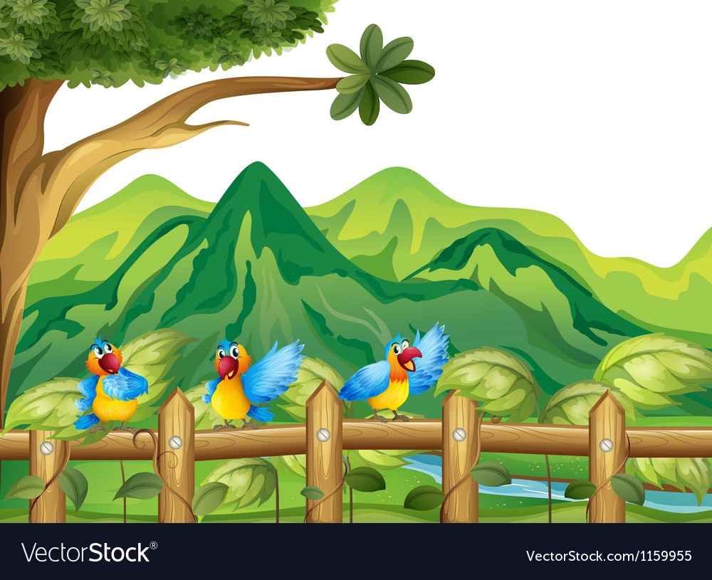 Three colorful parrots vector | Price: 1 Credit (USD $1)