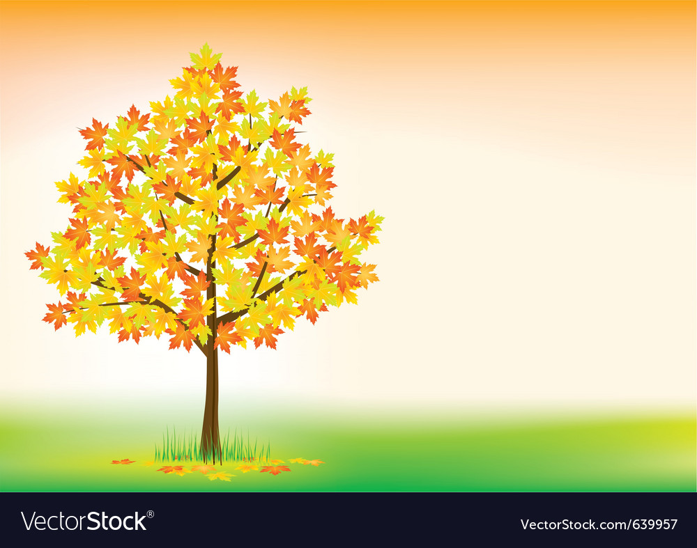 Autumn maple vector | Price: 1 Credit (USD $1)