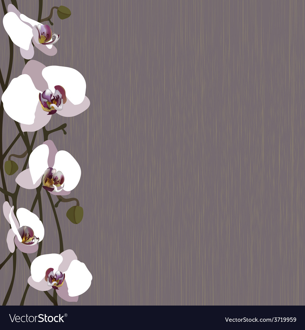 Purple background with white orchid flowers vector | Price: 1 Credit (USD $1)