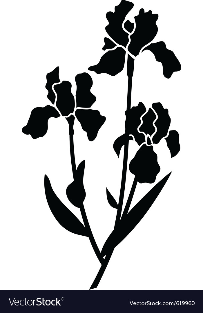 Black silhouettes of iris vector | Price: 1 Credit (USD $1)