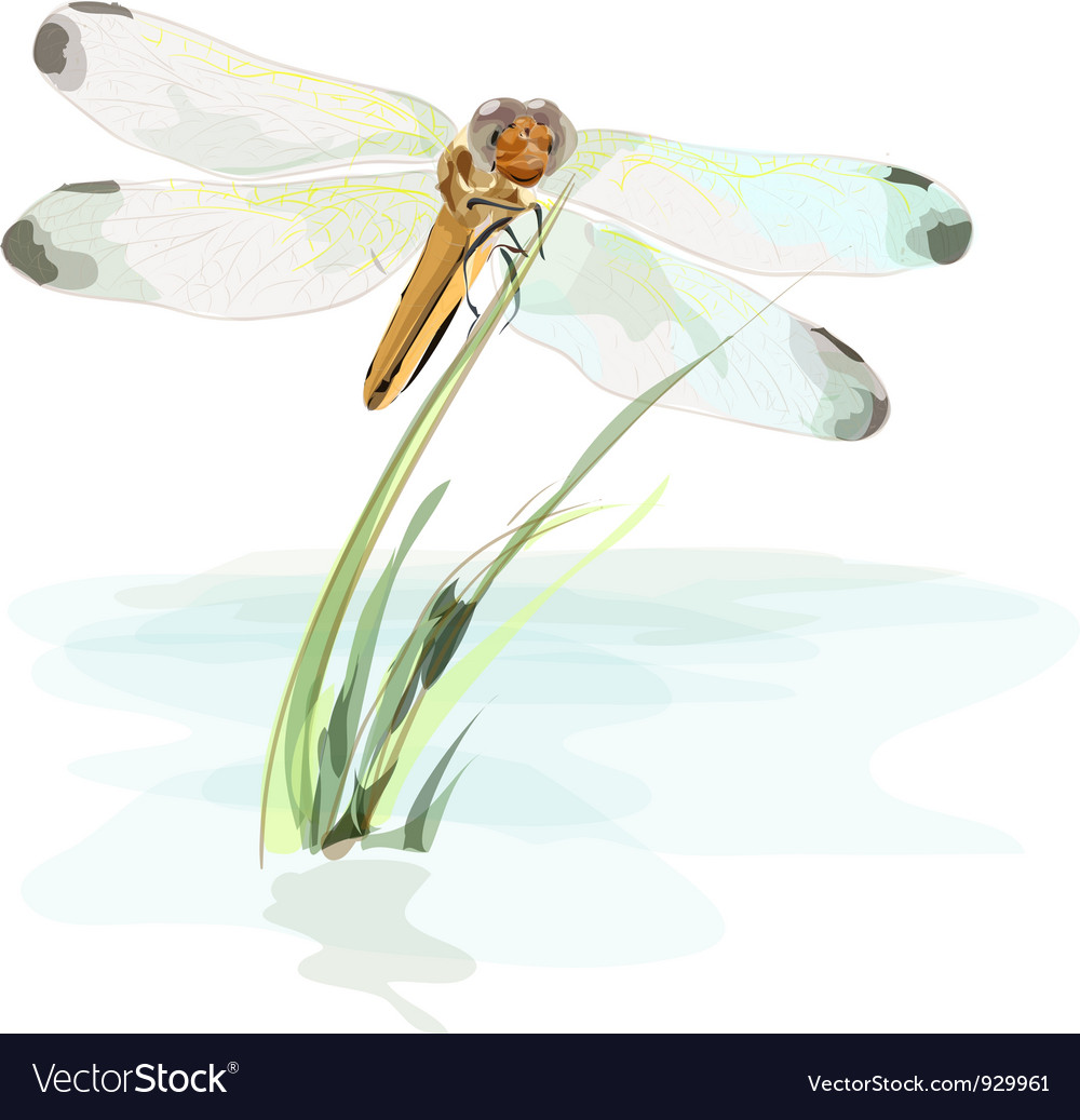Dragonfly vector | Price: 3 Credit (USD $3)