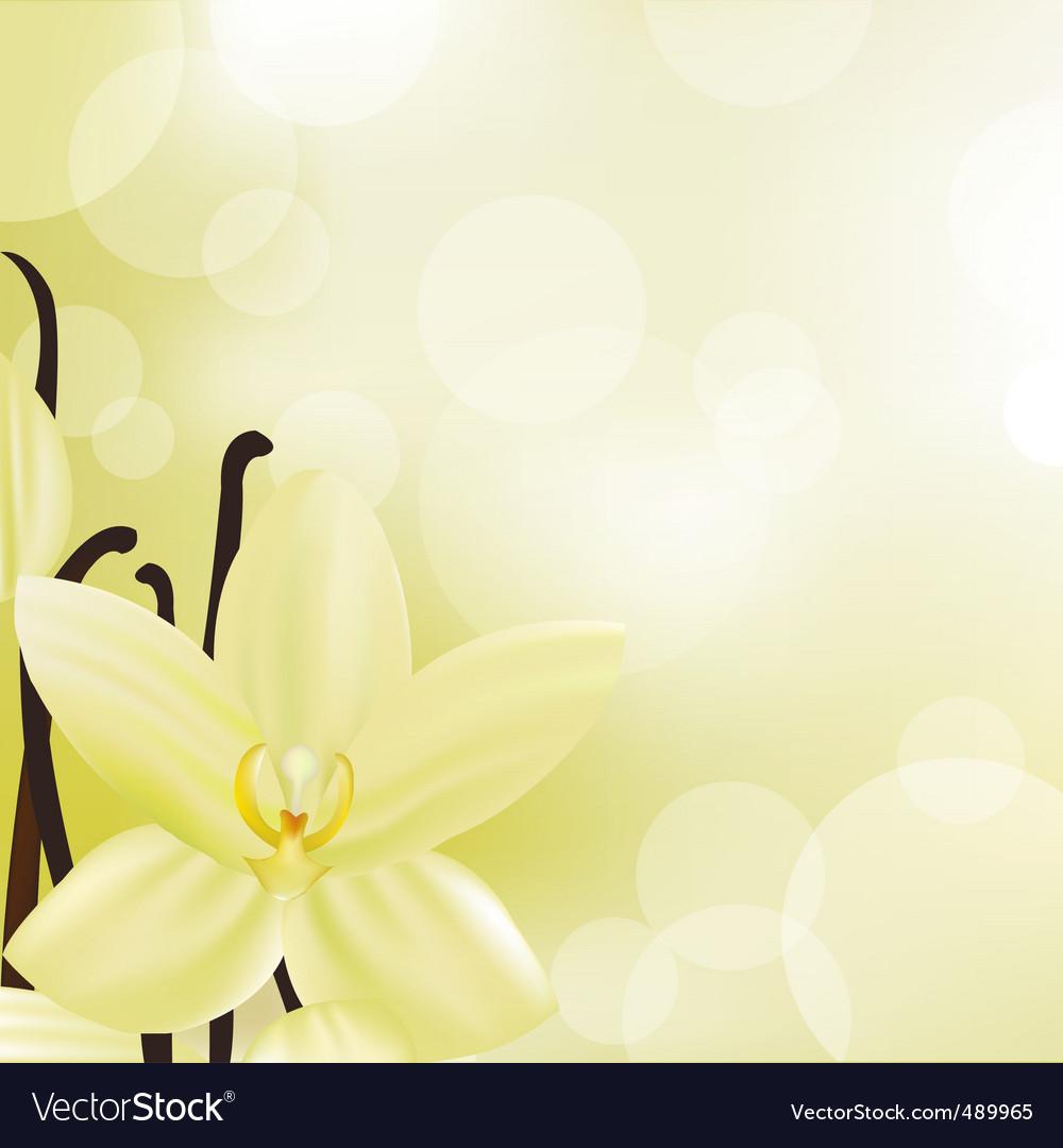 Vanilla vector | Price: 1 Credit (USD $1)