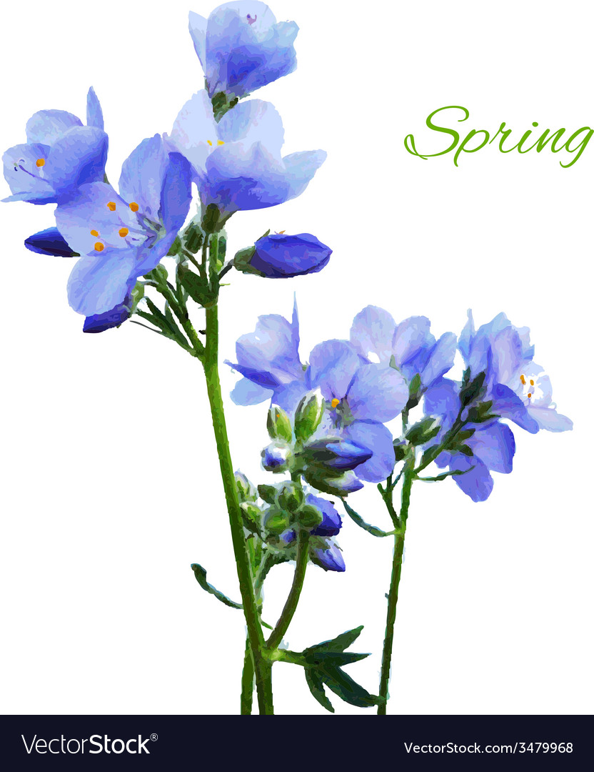 Blue watercolor flowers vector | Price: 1 Credit (USD $1)