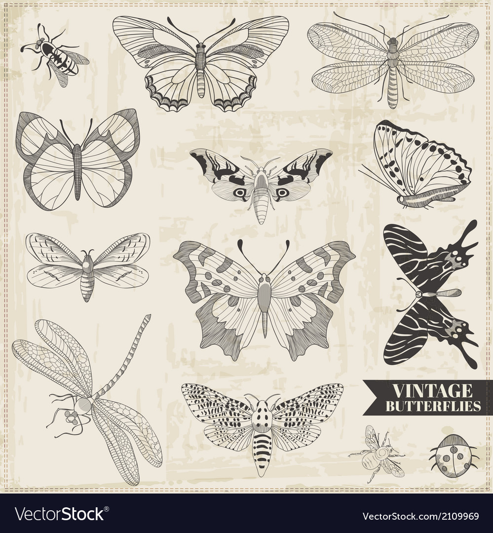 Set calligraphic hand drawn butterflies vector | Price: 1 Credit (USD $1)