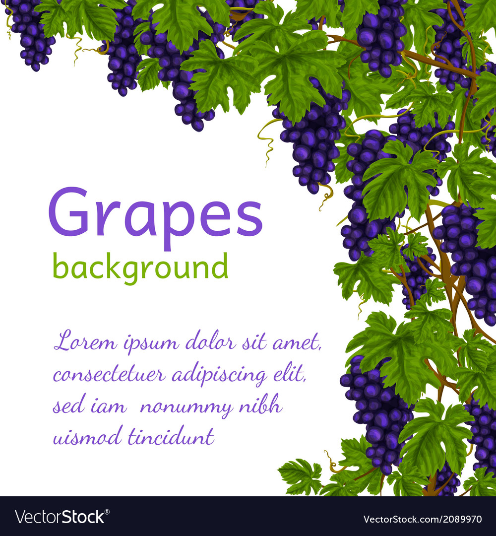 Grapes background wallpaper vector | Price: 1 Credit (USD $1)