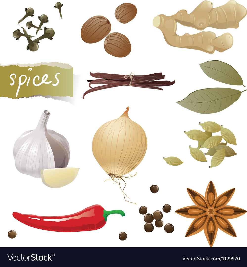 Spices vector | Price: 1 Credit (USD $1)