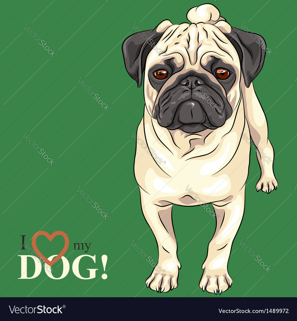 Dog serious fawn pug breed vector | Price: 3 Credit (USD $3)