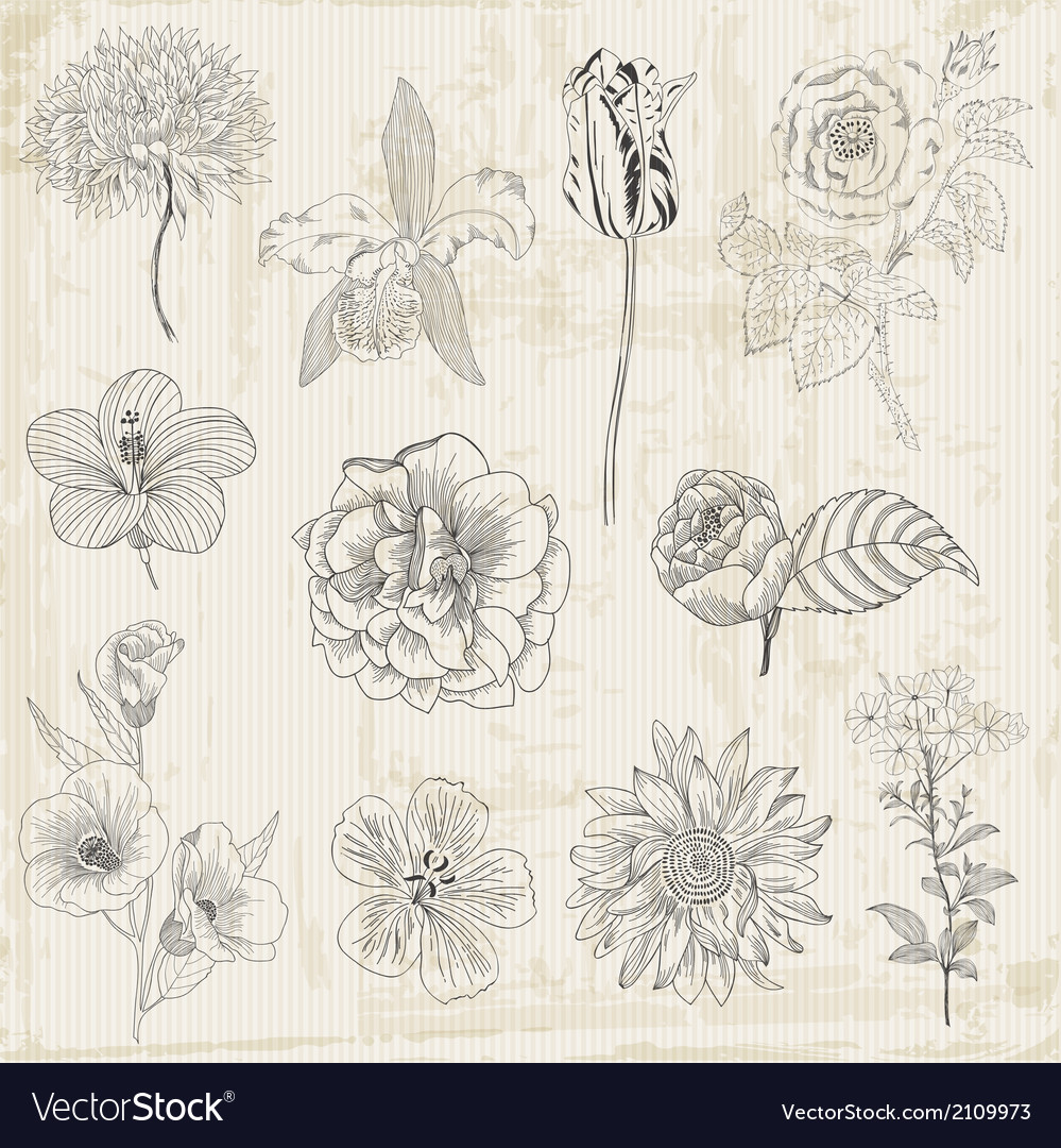 Beautiful floral elements vector | Price: 1 Credit (USD $1)