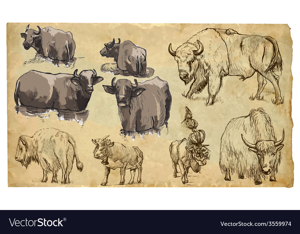 Animals theme bovidae cows bisons yak buffalo pac vector | Price: 3 Credit (USD $3)