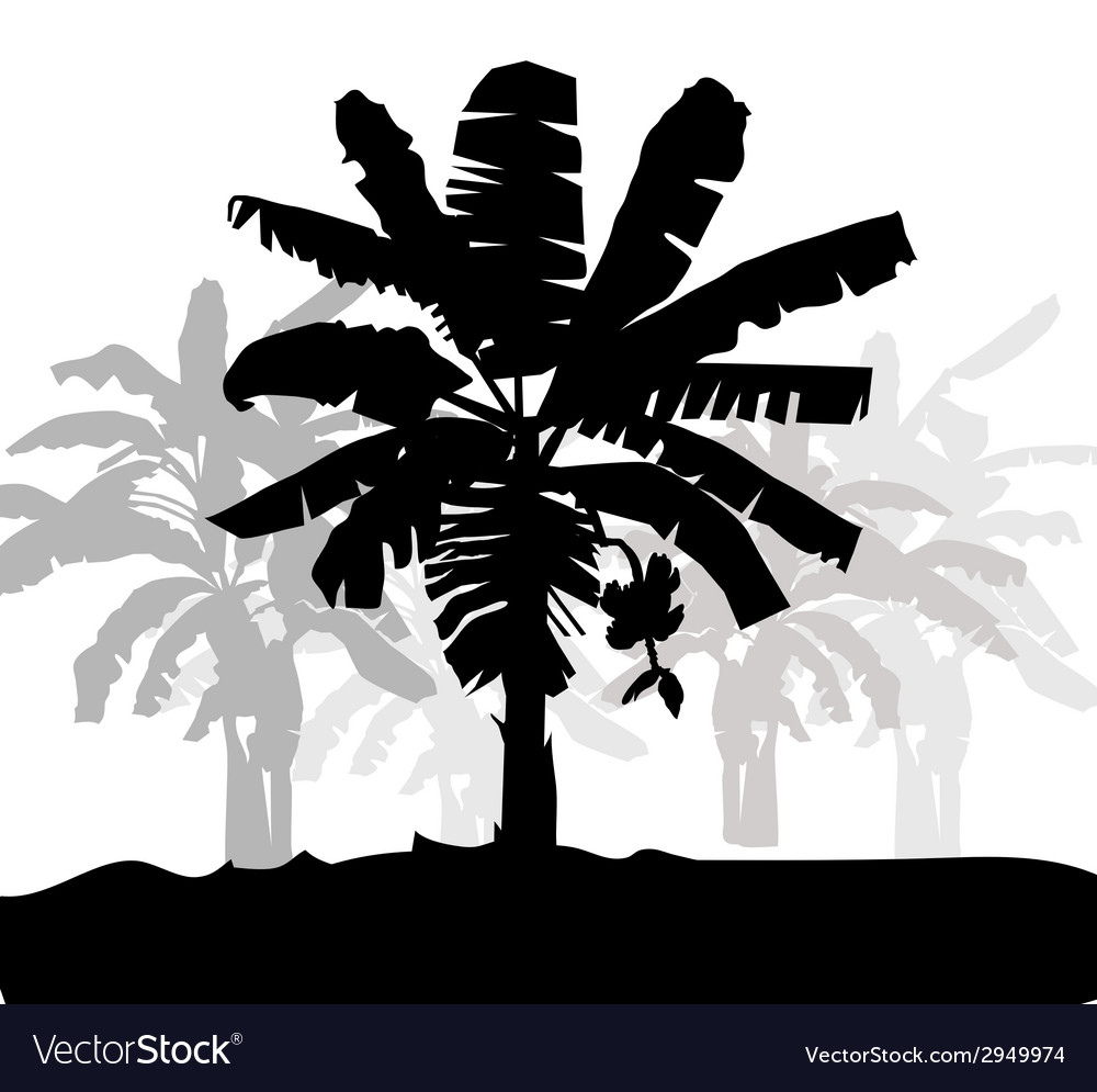 Banana tree silhouette vector | Price: 1 Credit (USD $1)