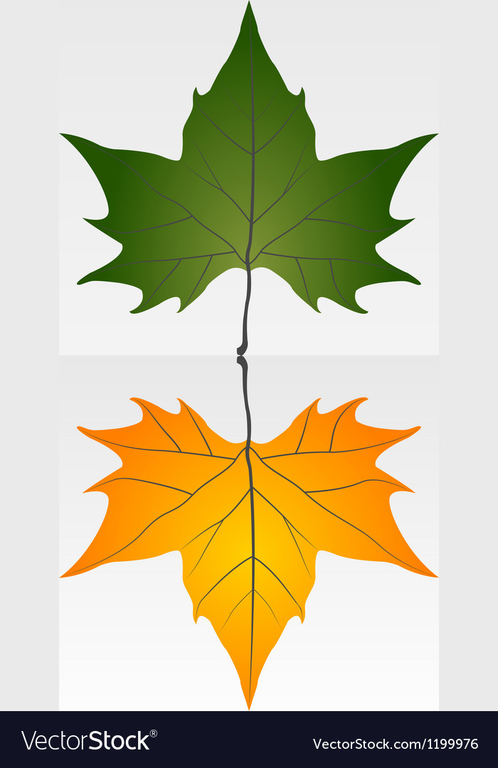 Green and dry leaf vector | Price: 1 Credit (USD $1)