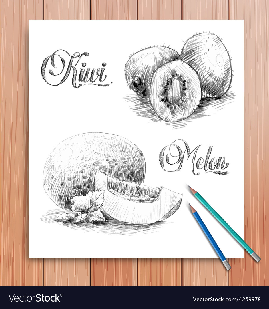 Realistic sketch of fruits kiwi and melon vector | Price: 1 Credit (USD $1)