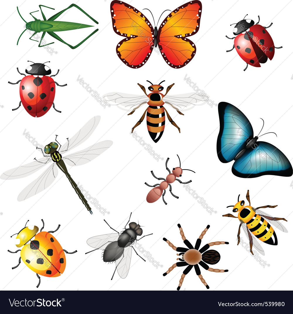 Collection of insects vector | Price: 3 Credit (USD $3)