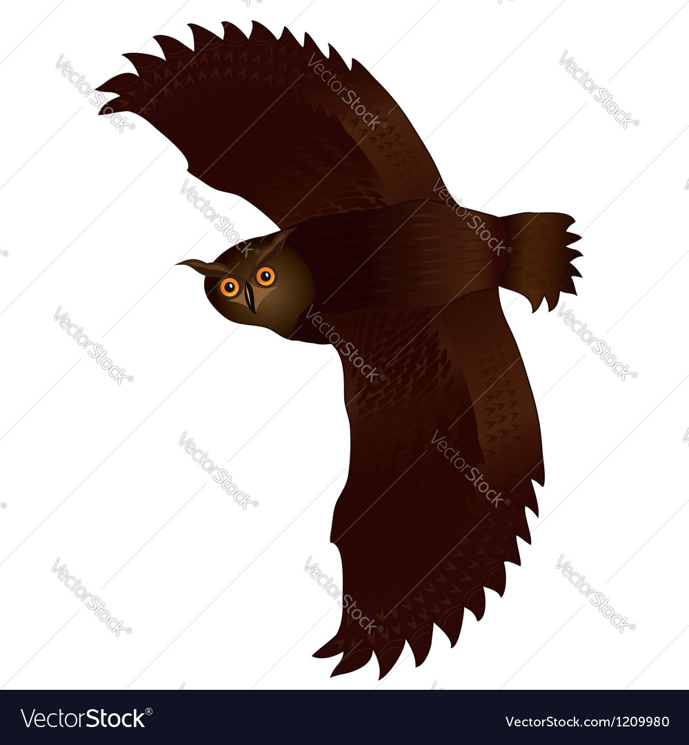 Flying owl isolated over white vector | Price: 1 Credit (USD $1)