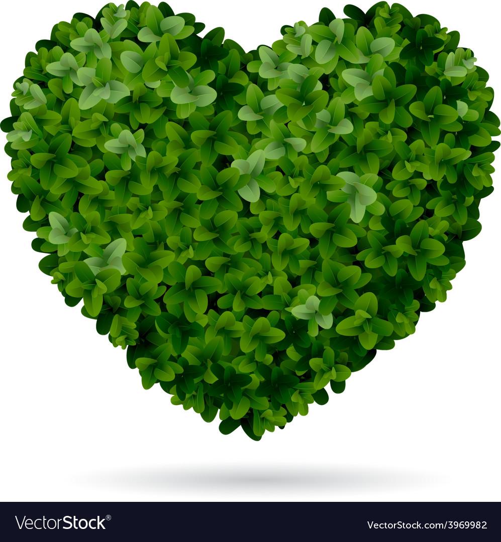 Boxwood heart vector | Price: 3 Credit (USD $3)