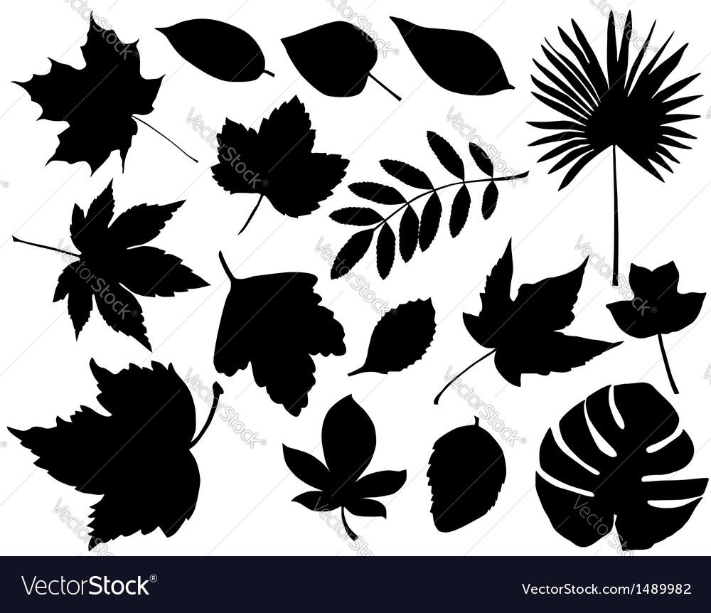 Foliage silhouette vector | Price: 1 Credit (USD $1)