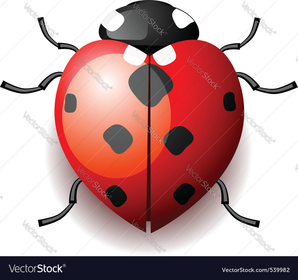 Heart form ladybird vector | Price: 1 Credit (USD $1)