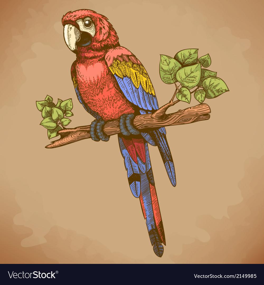 Engraving big parrot retro vector | Price: 3 Credit (USD $3)