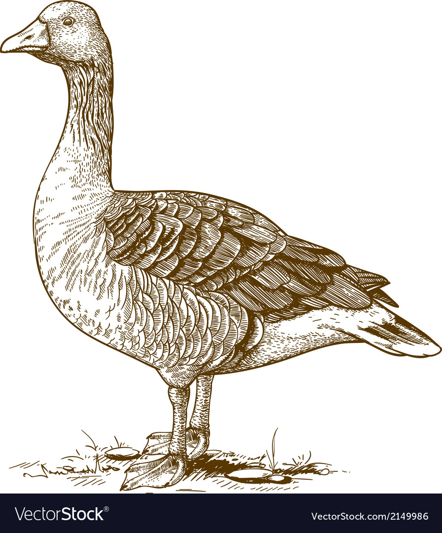 Engraving goose vector | Price: 1 Credit (USD $1)