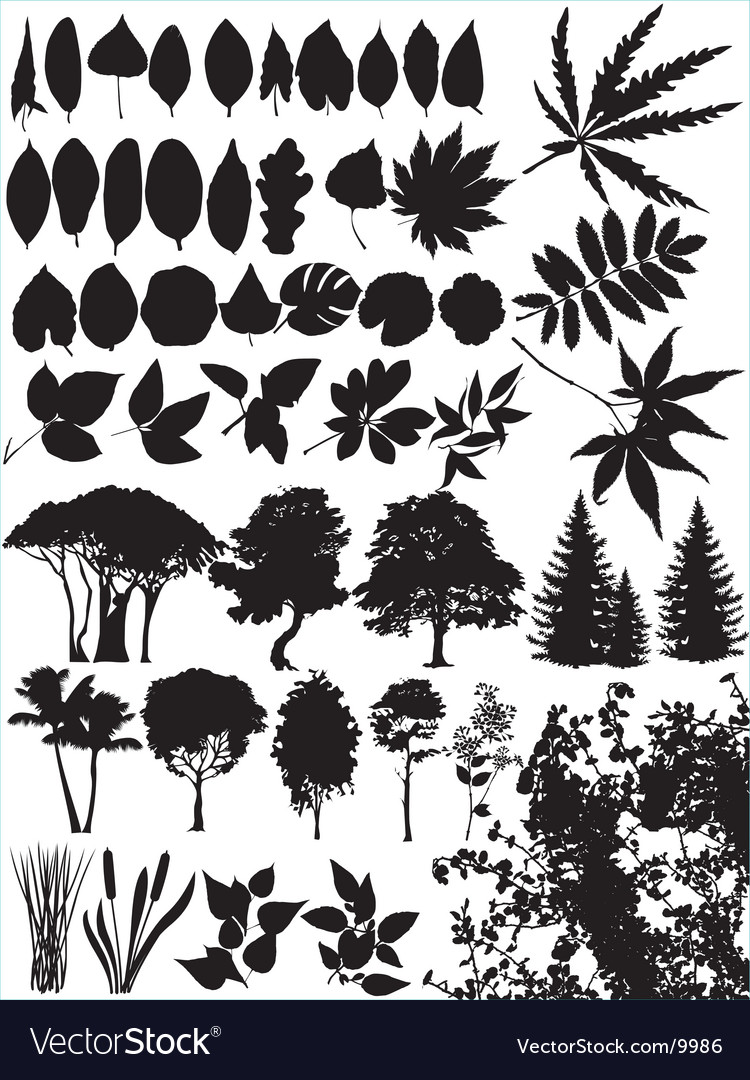 Trees grass leaf plant vector | Price: 1 Credit (USD $1)