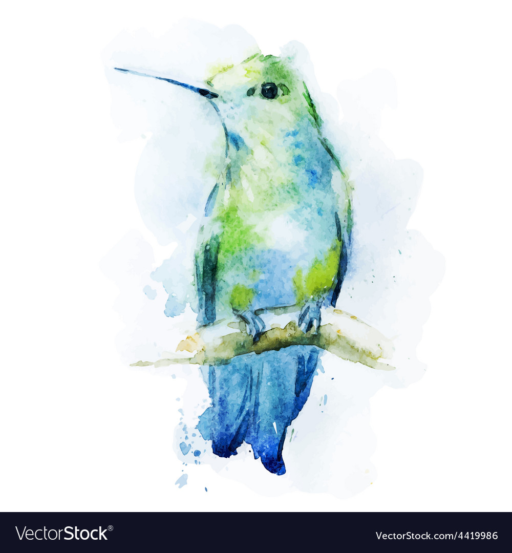 Watercolor colibri bird vector
