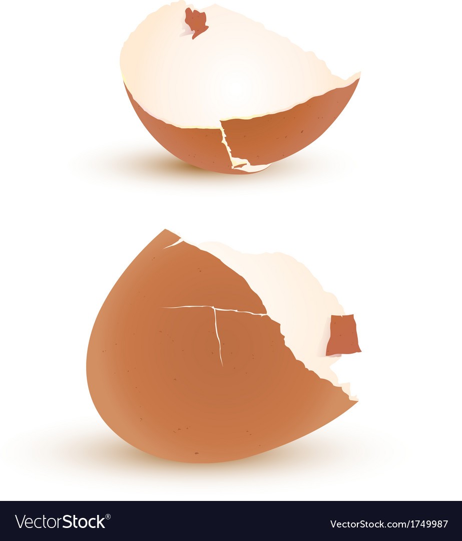 Eggshell vector | Price: 1 Credit (USD $1)