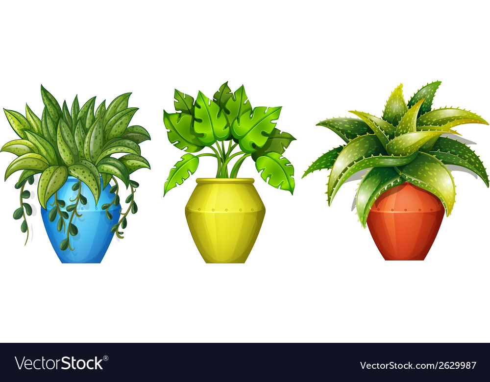 Plants in the pot vector | Price: 1 Credit (USD $1)