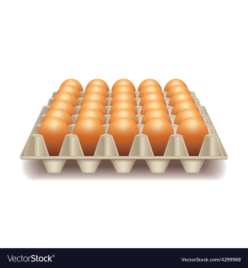 Tray with eggs isolated on white vector | Price: 3 Credit (USD $3)