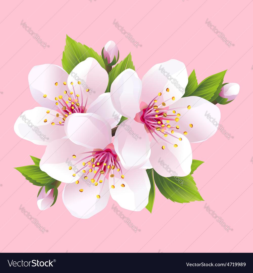 Branch of pink blossoming sakura japanese cherry vector