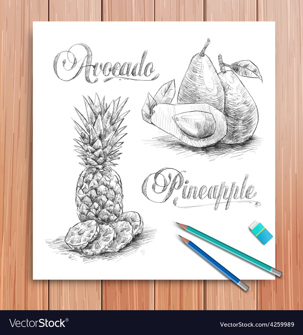Realistic sketch of fruits avocado and vector | Price: 1 Credit (USD $1)