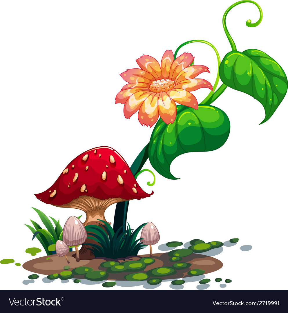 A flowering plant and mushrooms vector | Price: 1 Credit (USD $1)