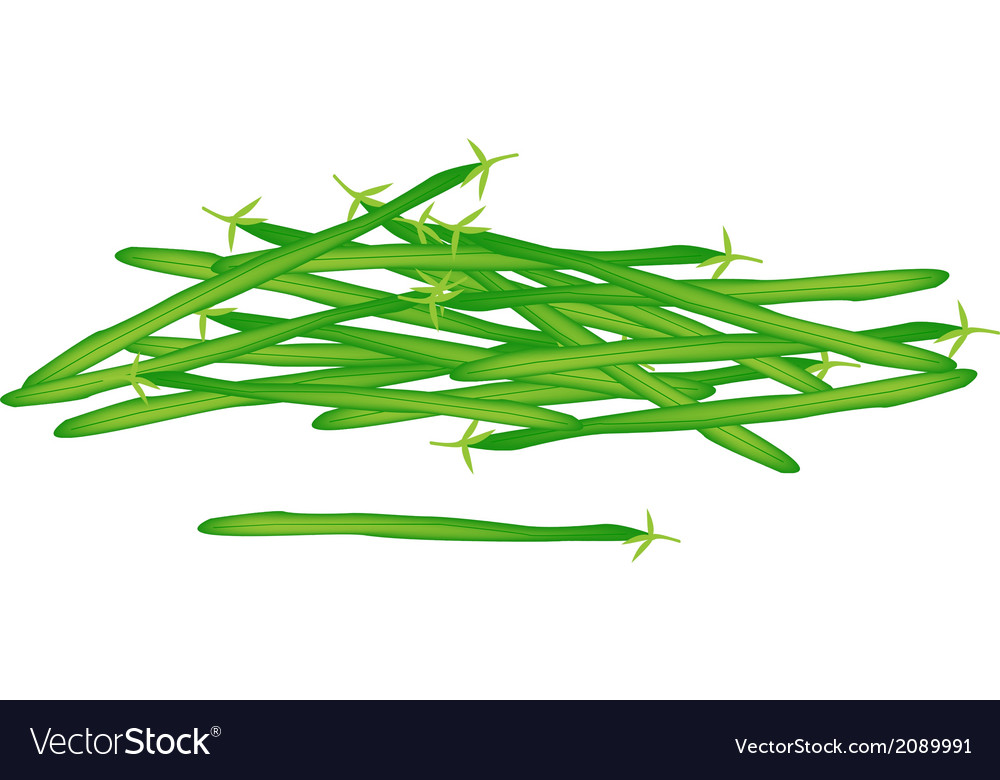 Delicious fresh green beans on white background vector | Price: 1 Credit (USD $1)