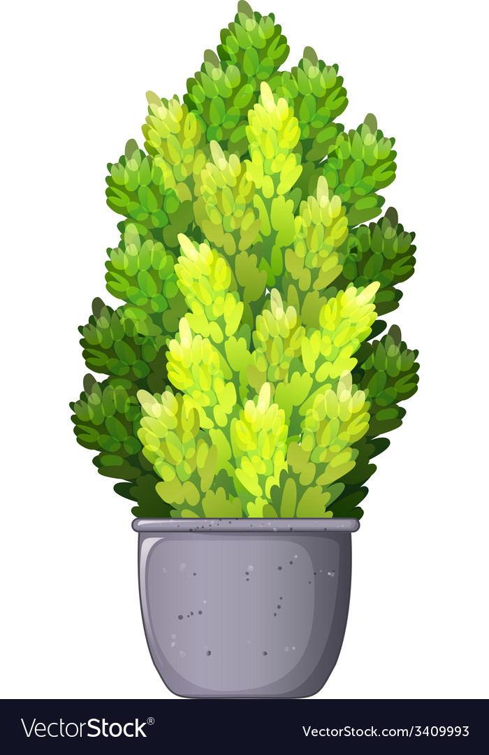 A decorative houseplant vector | Price: 1 Credit (USD $1)