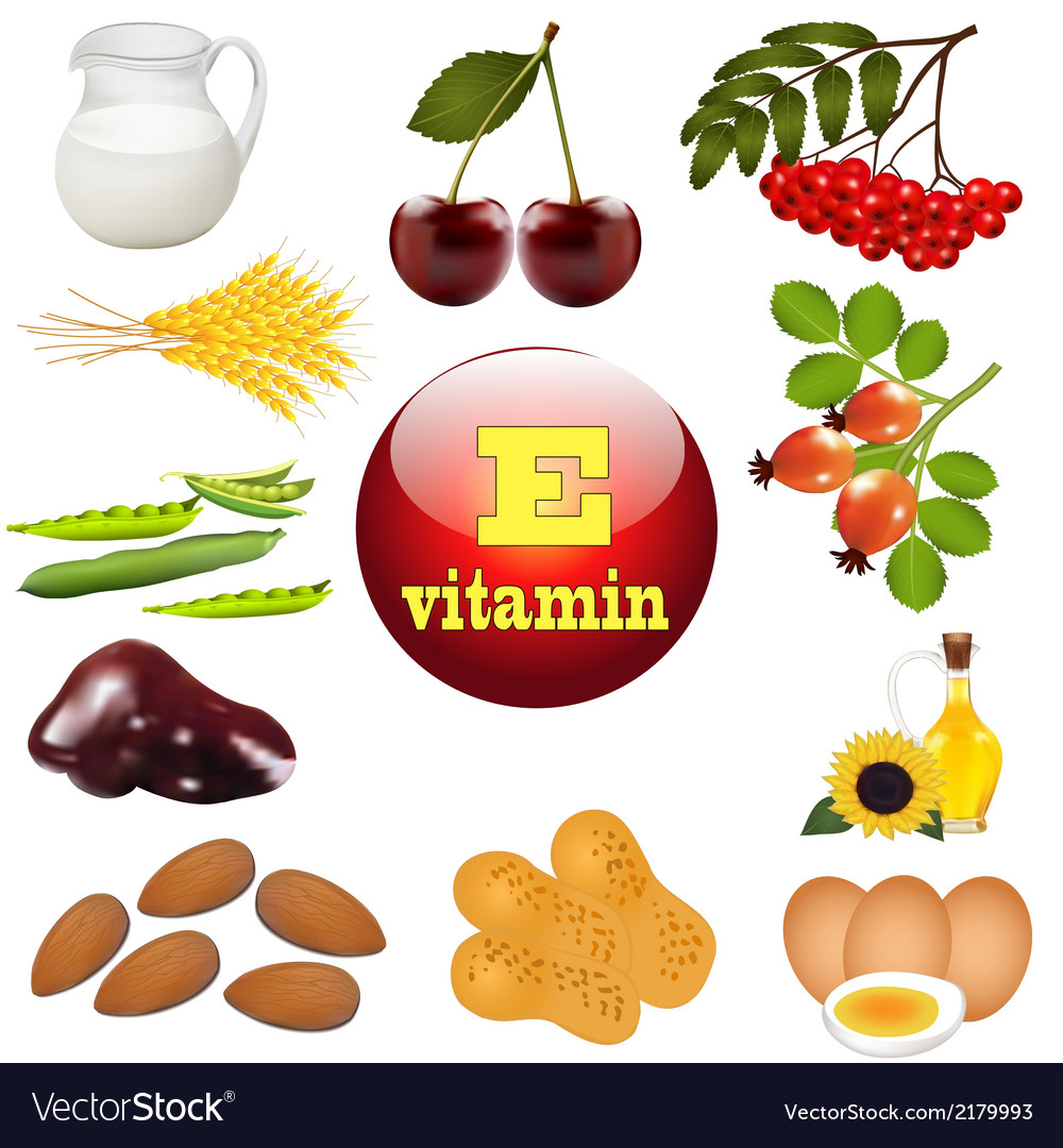Vitamin e the origin vector | Price: 1 Credit (USD $1)