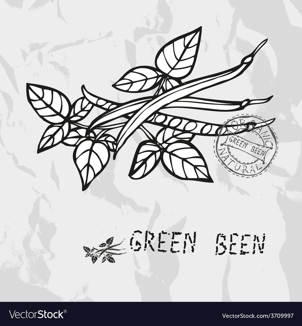 Hand drawn green been vector | Price: 1 Credit (USD $1)