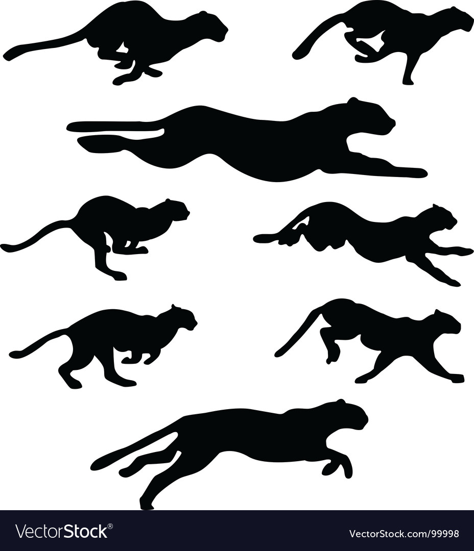 Wildcats set vector | Price: 1 Credit (USD $1)
