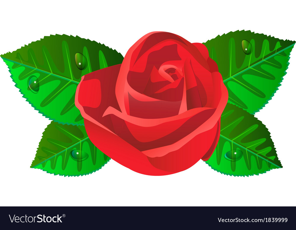 Red rose flower with shiny green leaves vector | Price: 1 Credit (USD $1)