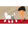 Elegant woman walk with her poodle vector