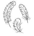 Bird feathers set vector
