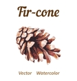 Watercolor pine cone on a white background vector