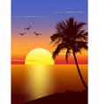 Sunset with palmtree silhouette vector