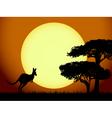 Kangaroo at sunset vector