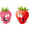 Strawberry and raspberry vector
